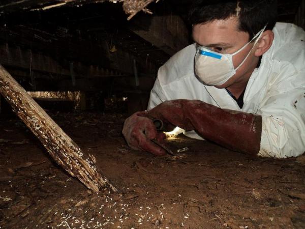 termites.asset