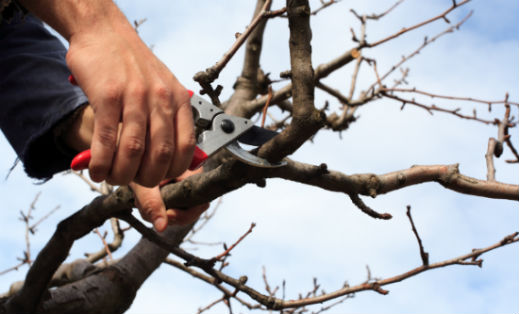 About Tree Pruning