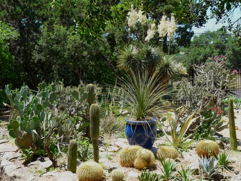Can A Cactus In Your Yard Be Harmful