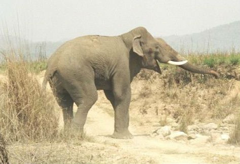 Call Of The Wild - A Manual To Explore The Stunning Corbett