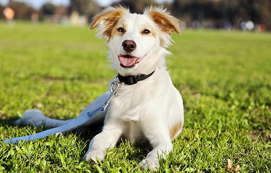 deca durabolin for dogs