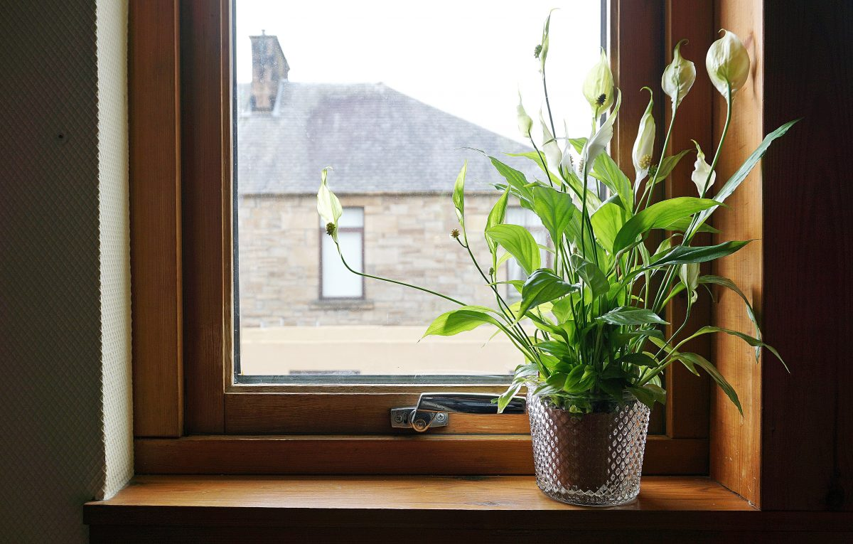 Plant Ideas To Boost Healthy Energy In Your Apartment