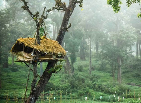 Enjoy Wayanad -The Land Of Hills and Spices