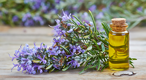 Amazing Benefits Of Rosemary Oil