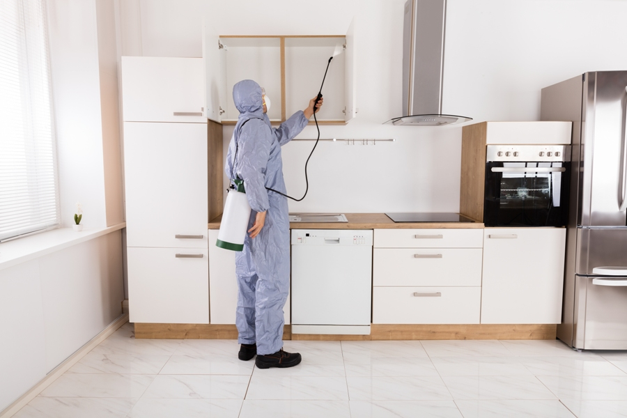 Fire The Pesky Pest With The Best Pest Control Services