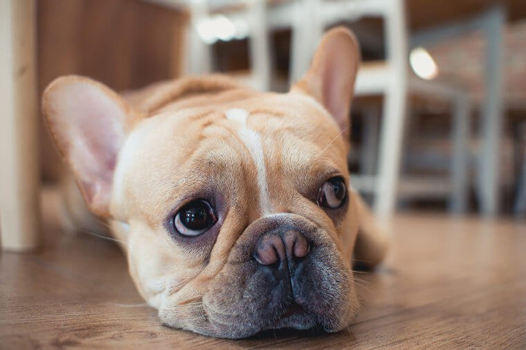 Alarming Signs To Take Your Pet To The Vet