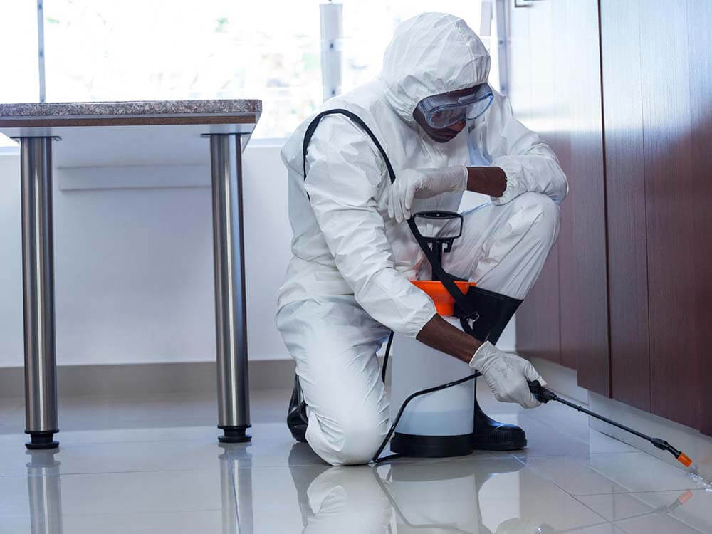9 Pest Control Remedies You Should Try Out At Home
