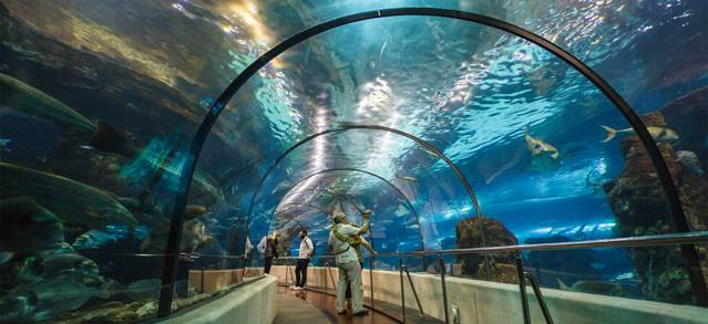 Barcelona's Aquarium: A Submarine Walk