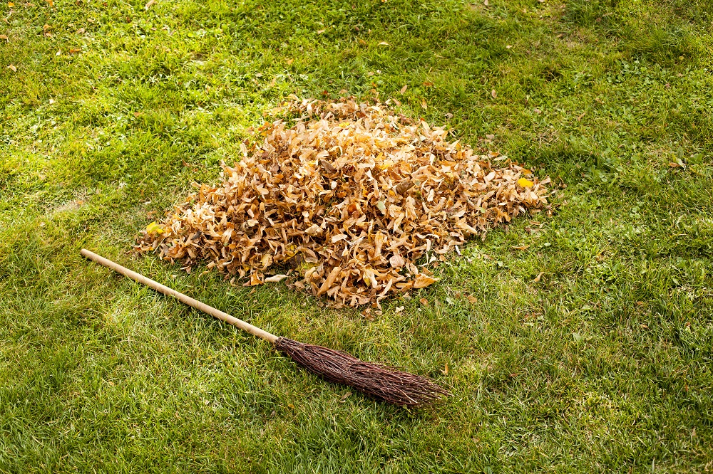 Leaf Clearance In Autumn