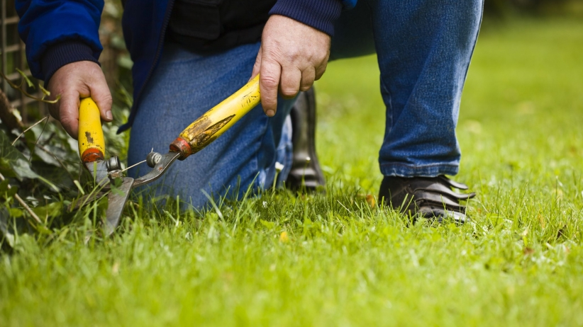 Tips For Working With Landscaping Companies