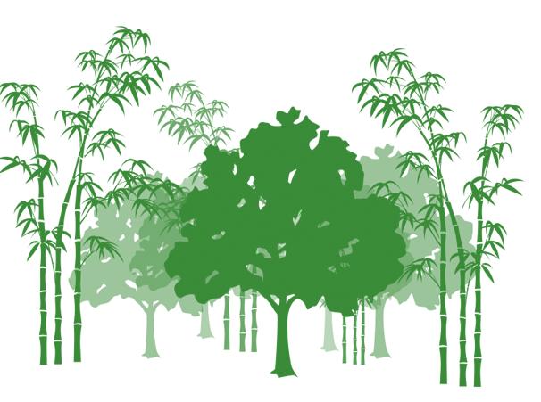 EcoPlanet Bamboo