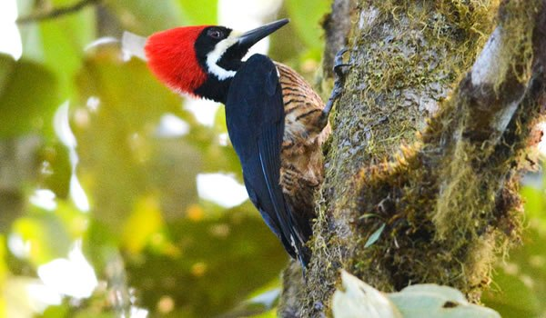 4 Great Destinations For Birdwatchers