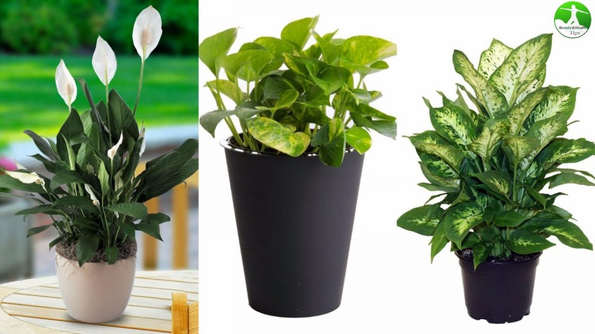 Why Should House Plants Be A Household Essential?